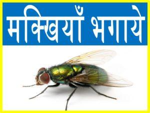 मक्खियों को भगाने तथा निजात पाने के टिप्स घरेलु उपचार upcharnuskhe