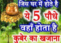 5 पौधे जो होते है शुभ वास्तु Lucky Plants for Home Vastu Tips