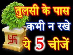How to Worship Tulsi