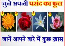 चुने अपनी पसंद का फूल जाने अपने राज Pick a Flower and Know Your Personality