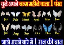 चुने अपने जन्म महीने वाले पंख और जाने अपने राज की बात Personality Test