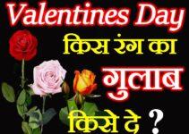 वैलेंटाइन्स डे किसे किस रंग का गुलाब दे Valentines Day Rose Colors meaning